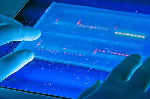 Molekulaarbioloogia ja elektroforees